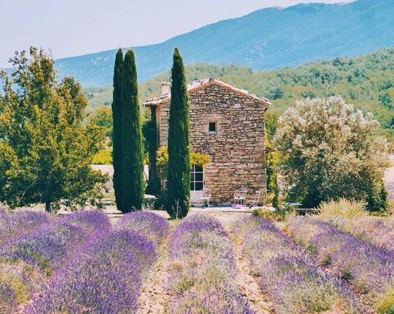 Provence - biking along lavenders