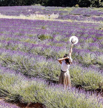 Plateau-claparades-Provence-Lavande-FMR-blog-voyage